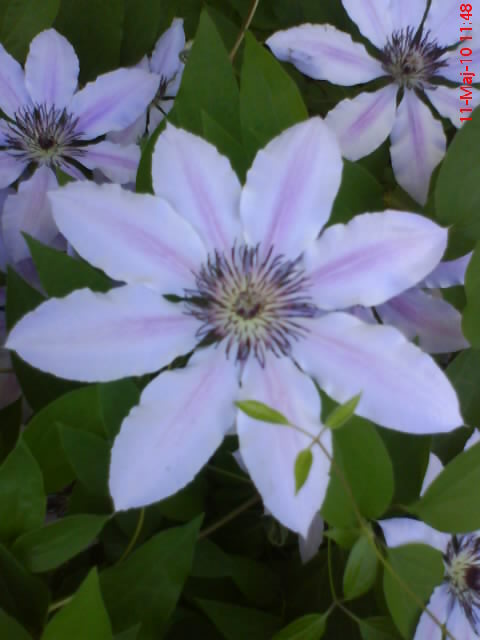 slike iz moje bašte & vrta Dsc04211