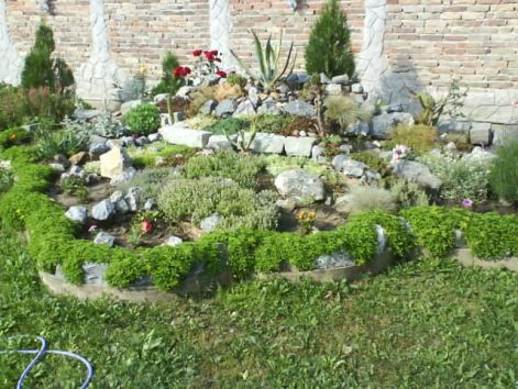 slike iz moje bašte & vrta Kam510