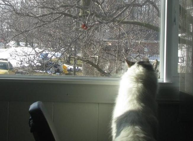 04/03/11 ~ my sweet kitty after a cardinal Pbr_0011
