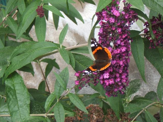 Les animaux de nos jardins... Mai_2010