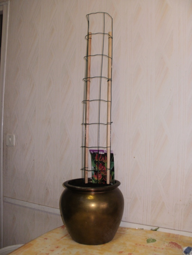 Gloriosa Rothschildiana P1010020