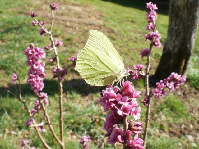 insecte bourdons P1010055