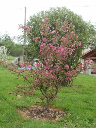 Le printemps a commencé!!!!!!!!!!!! P1010114