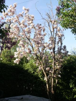 Le printemps a commencé!!!!!!!!!!!! P1010115