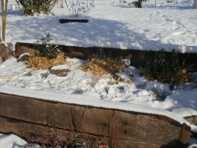 protection des plantes en periode hivernale P1010134