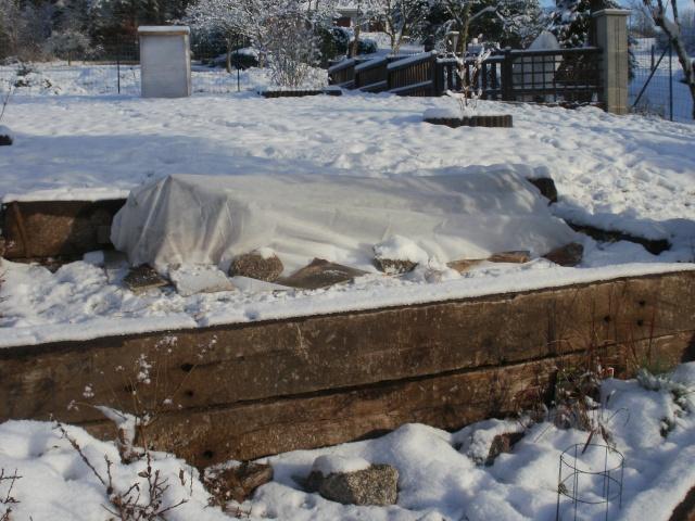 protection des plantes en periode hivernale P1010136