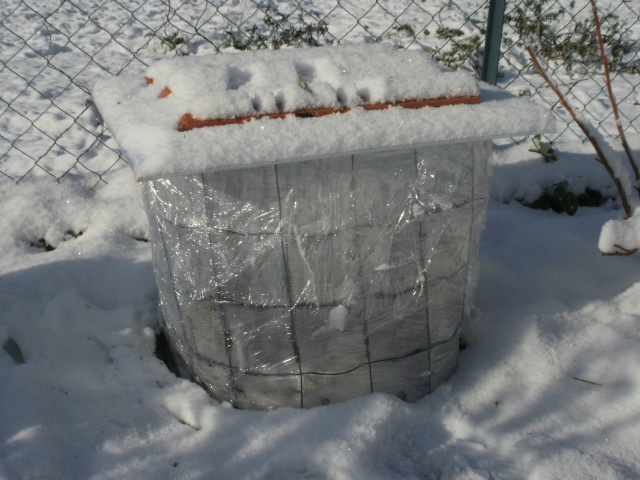 protection des plantes en periode hivernale P1010138