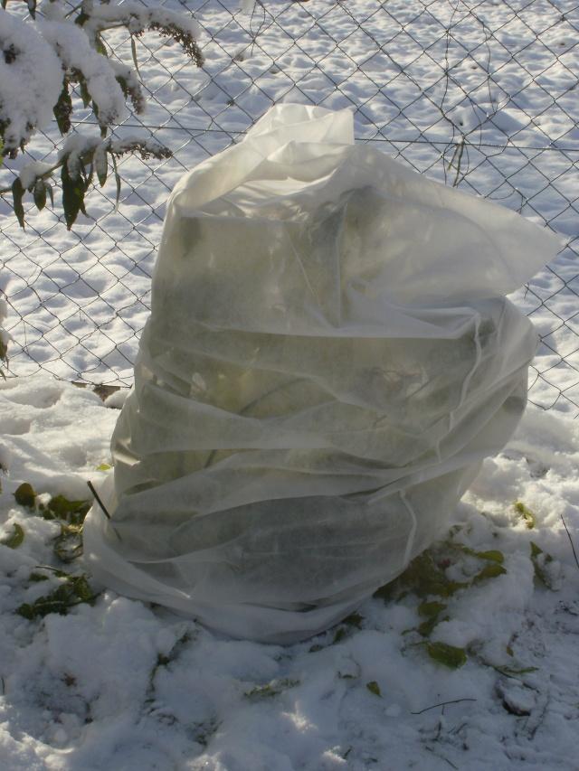protection des plantes en periode hivernale P1010140