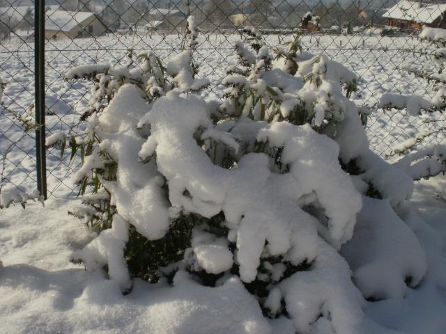 protection des plantes en periode hivernale P1010141