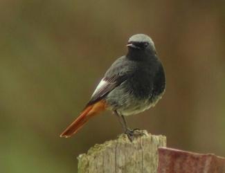 Reconnaitre les oiseaux de nos jardins... Rouge_11