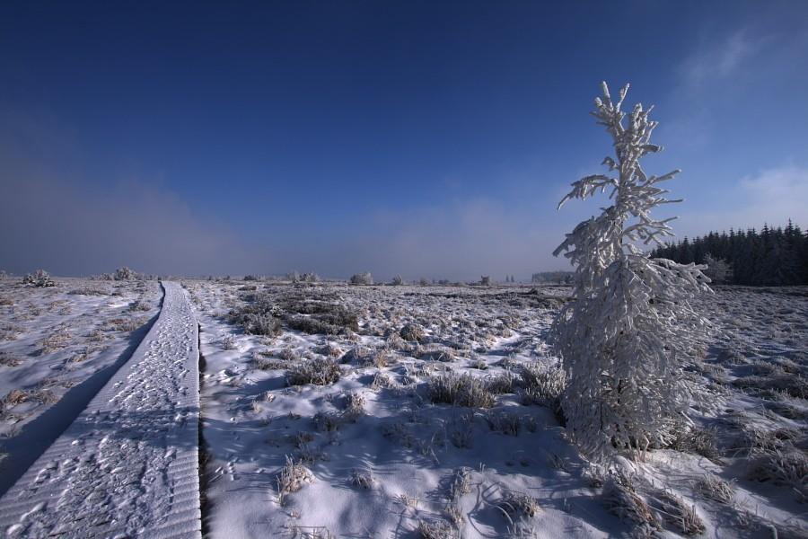 Fagnes sous le givre et la neige Img_2214