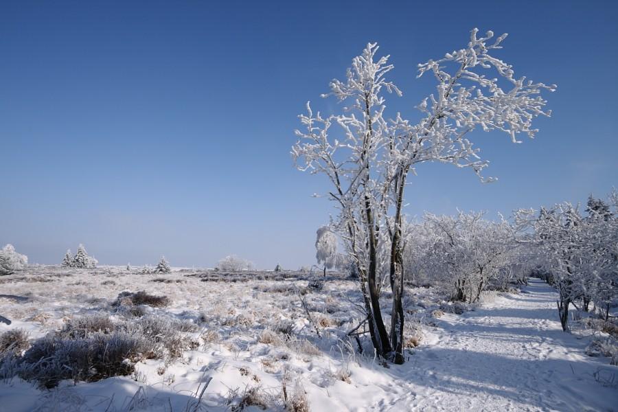 Fagnes sous le givre et la neige Img_2216