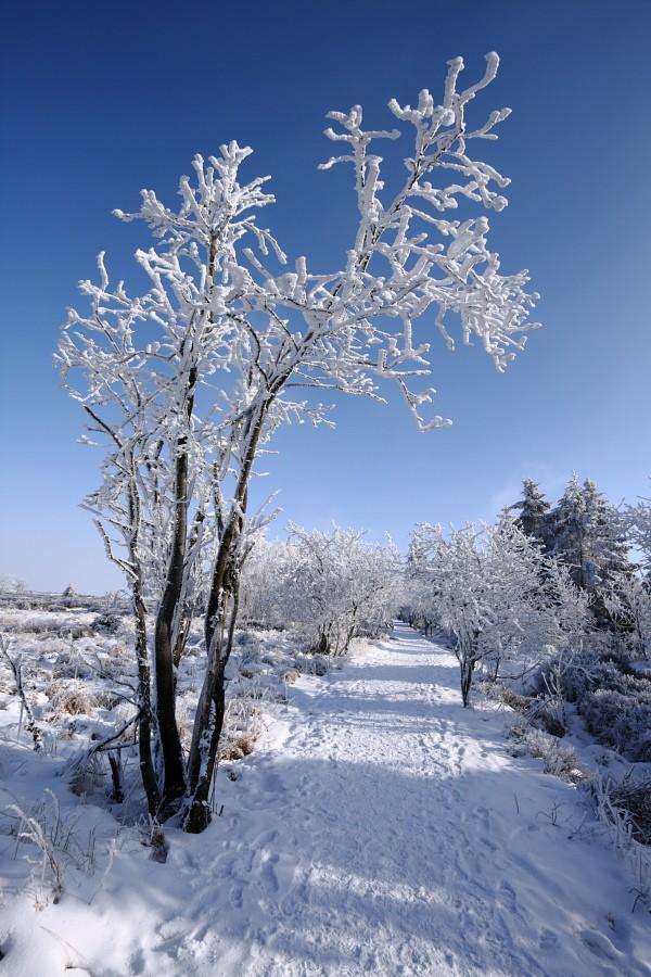 Fagnes sous le givre et la neige Img_2217