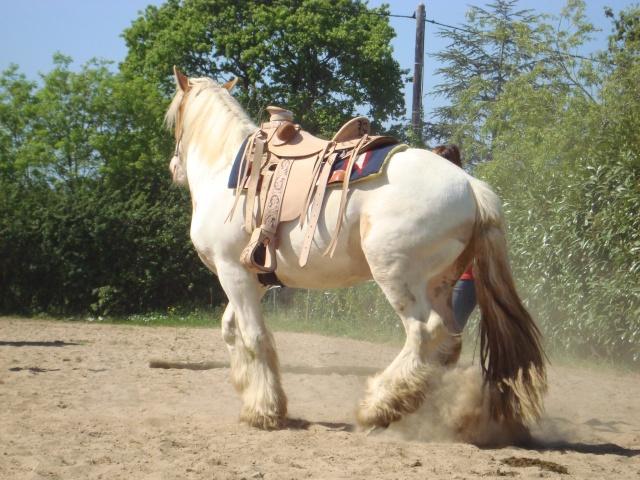 Travail à pied avec un cheval lourd Dsc04411