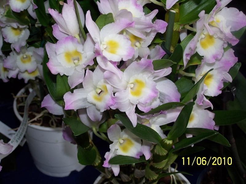 magnifique la st hyp aux cactus felicitation aboun 2_32810