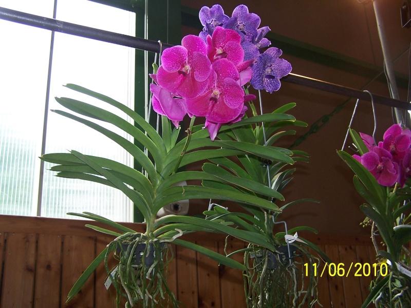 magnifique la st hyp aux cactus felicitation aboun 2_33010