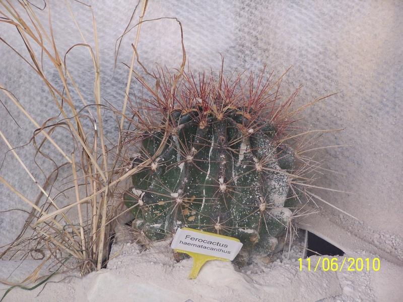 magnifique la st hyp aux cactus felicitation aboun 2_34110