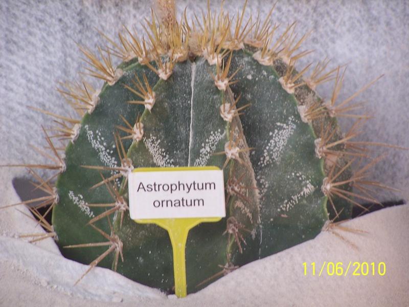 magnifique la st hyp aux cactus felicitation aboun 2_34210