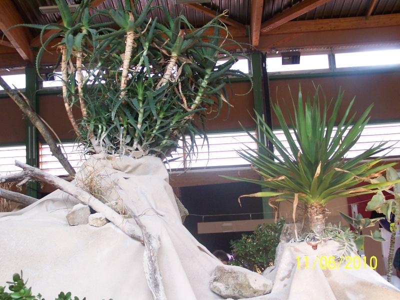 magnifique la st hyp aux cactus felicitation aboun 2_34510