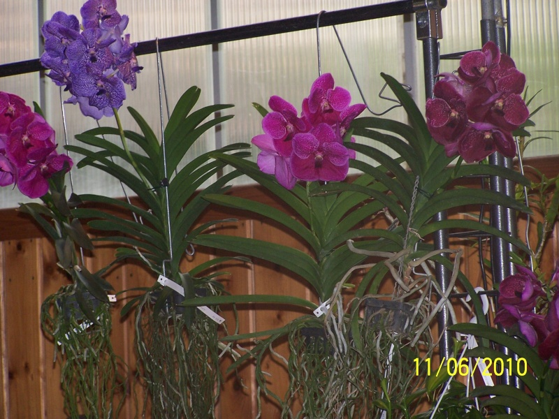 magnifique la st hyp aux cactus felicitation aboun 2_34910