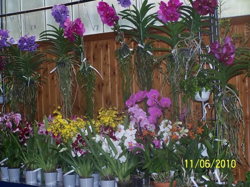 magnifique la st hyp aux cactus felicitation aboun 2_35010