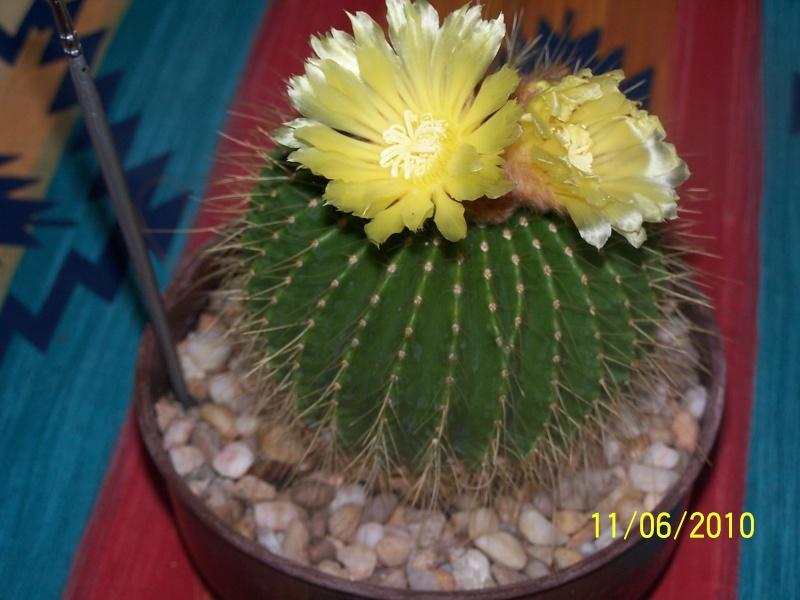 magnifique la st hyp aux cactus felicitation aboun 2_35110