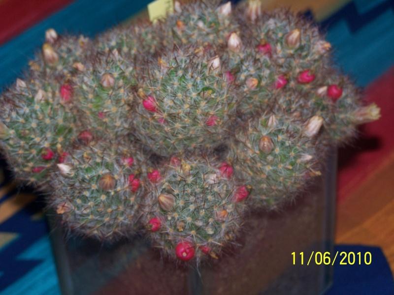 magnifique la st hyp aux cactus felicitation aboun 2_35310
