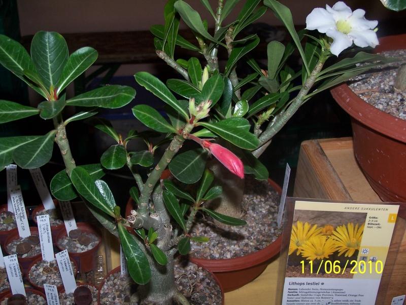 magnifique la st hyp aux cactus felicitation aboun 2_35910