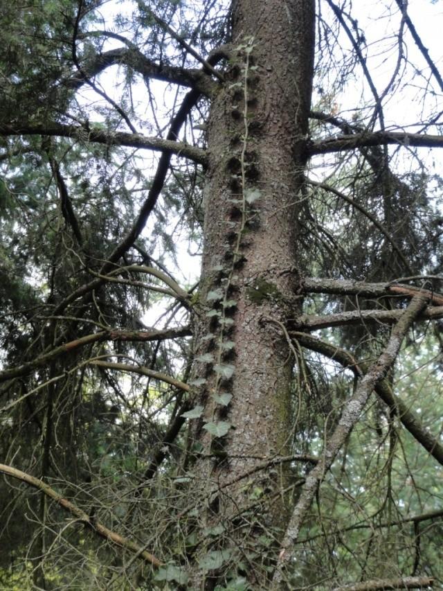 Quelques  arbres vu  hier  apres midi . Dsc02215