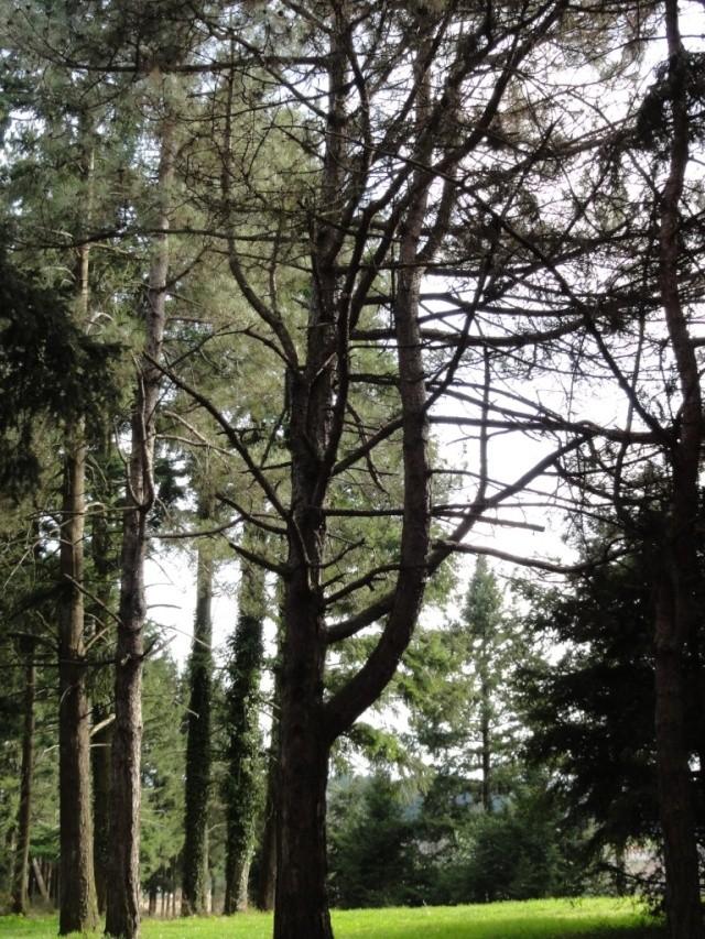 Quelques  arbres vu  hier  apres midi . Dsc02216