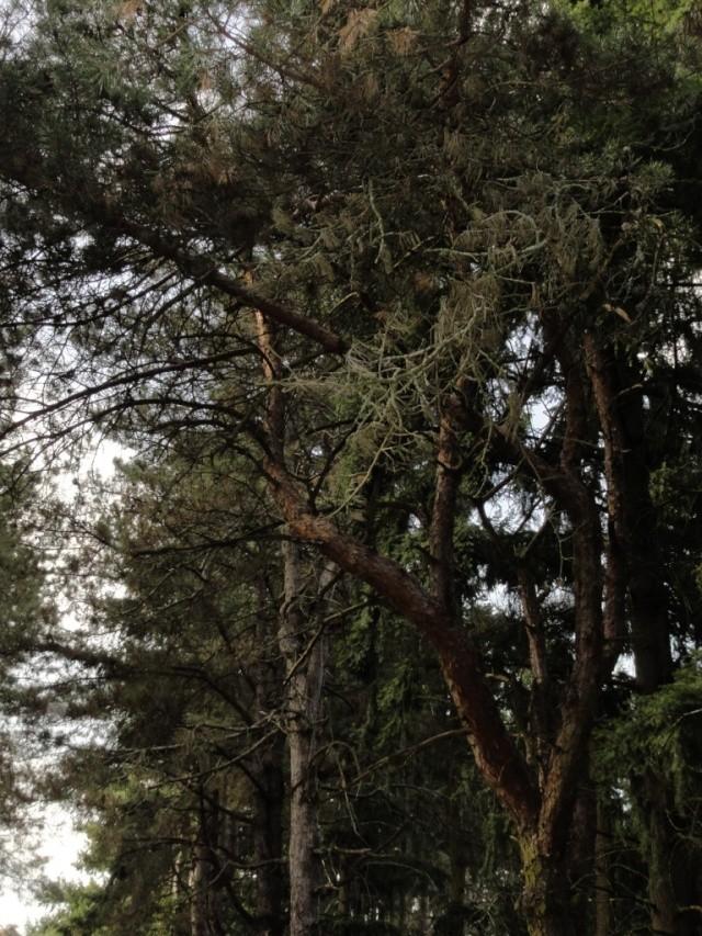 Quelques  arbres vu  hier  apres midi . Dsc02218