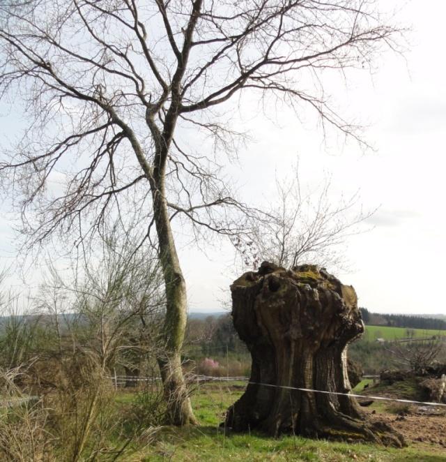 Quelques  arbres vu  hier  apres midi . Dsc02219
