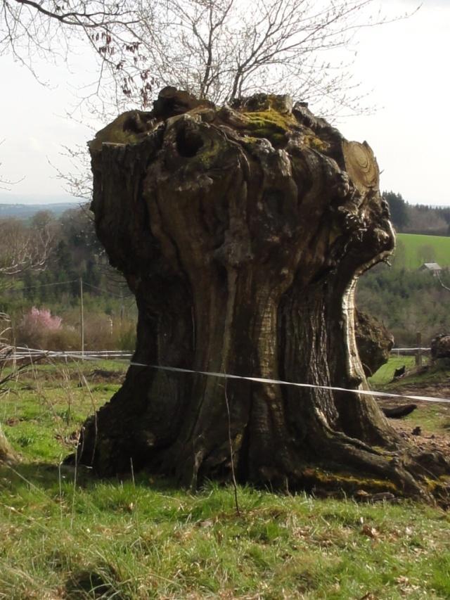 Quelques  arbres vu  hier  apres midi . Dsc02220