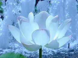 Ma Prière  et Neuvaine à notre Dame du perpetuel secours Fleur_28