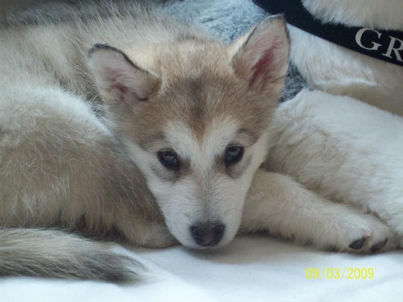 Nos loups grandissent, postez nous vos photos - Page 4 09_03_12