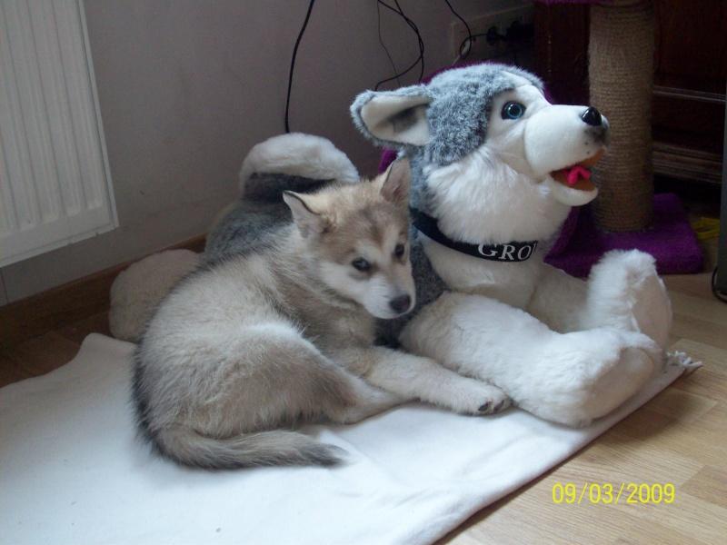 Nos loups grandissent, postez nous vos photos - Page 4 09_03_13