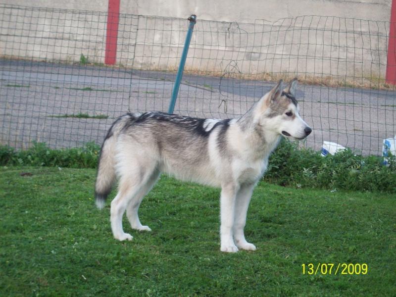 Nos loups grandissent, postez nous vos photos - Page 4 13_07_11