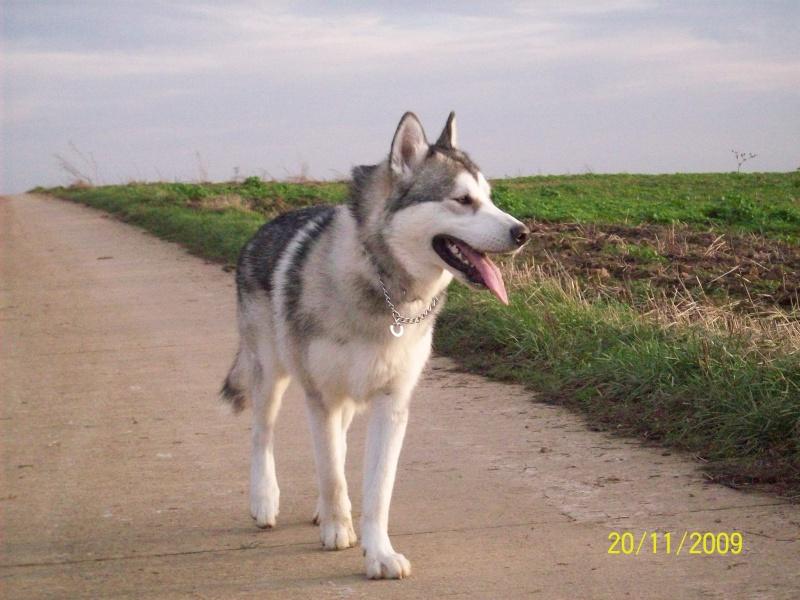 Nos loups grandissent, postez nous vos photos - Page 4 20_11_10