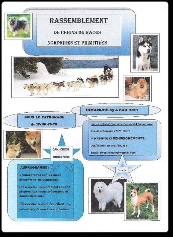 Rassemblement de chiens de races nordiques et primitives  à HAVRE ( Belgique) Vign_011