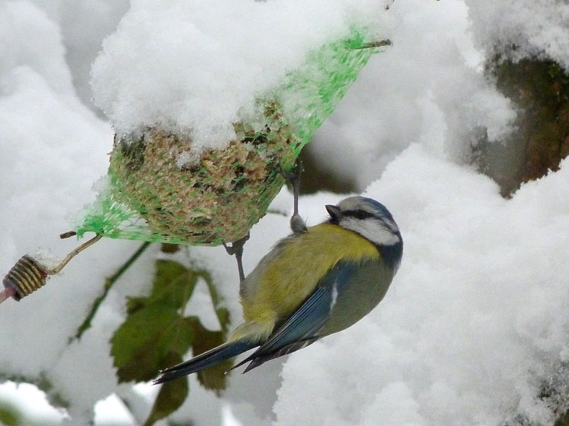Paysages sous la neige - Page 2 P1000512