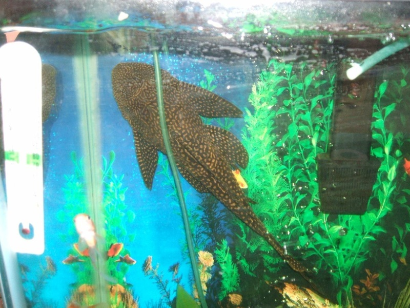 Signs of Spring are in the air or should I say the ground Pleco_10