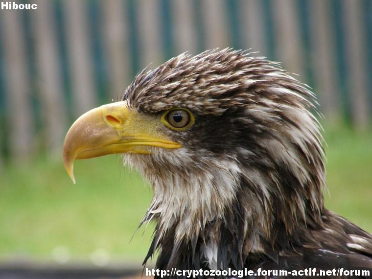 zoologie concours photographique forum Tête de Rapace en gros plan