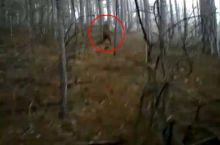 Cryptozoologie cryptozoology hominidé inconnu bigfoot forum ukraine wild man homme sauvage SDNikitin Patterson Gimlin Serega vidéo tape super 8 18 mars 2011