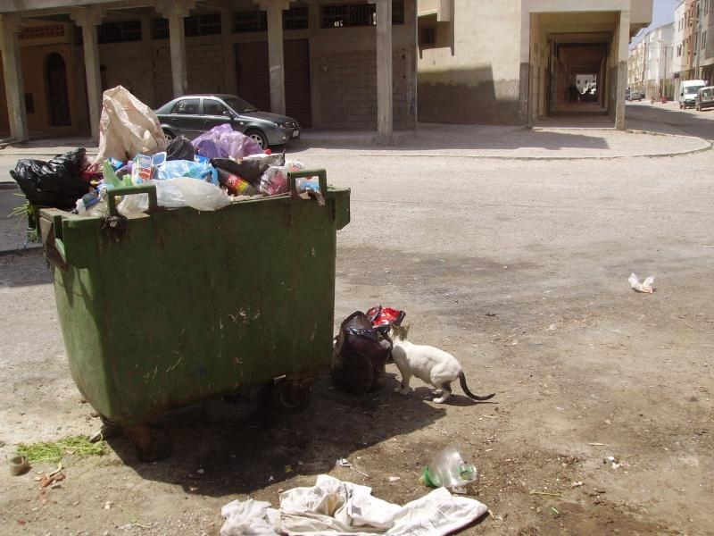Gestion déléguée Essaouira ... Pict0712
