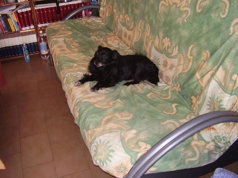 Indovina di chi è il divano? P1010014