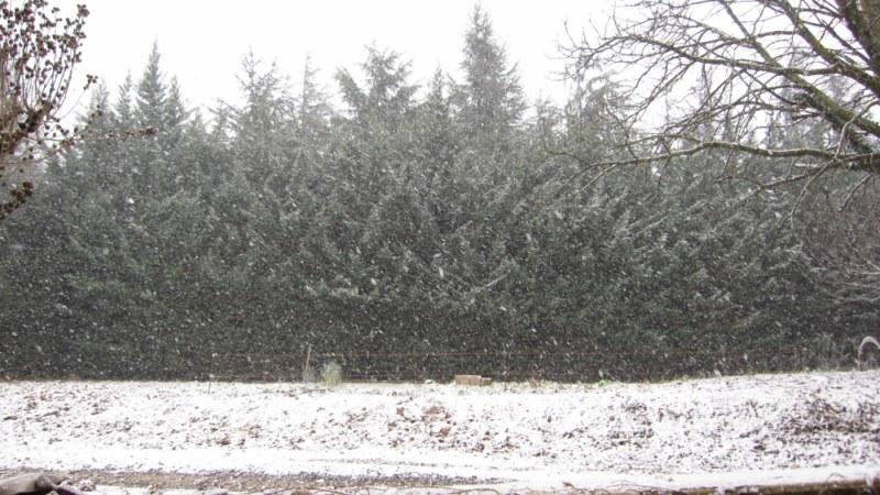l'hiver s'en va - Page 2 Img_0510