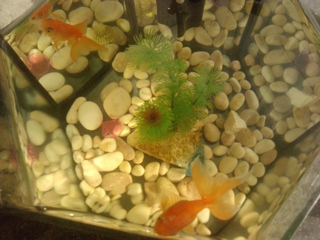 Akvarijske ribice 10032512