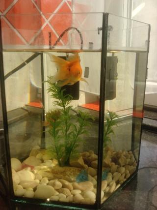 Akvarijske ribice 10032513
