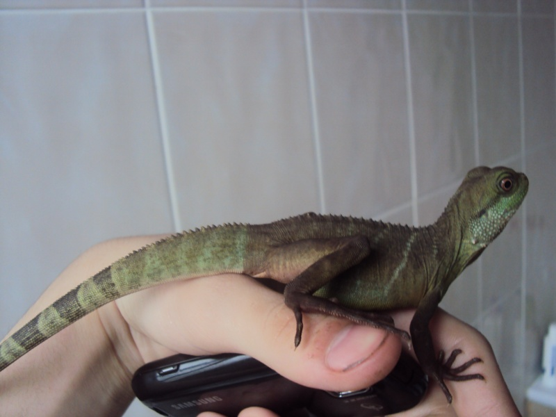 Mue dragon d'eau Le_bai10