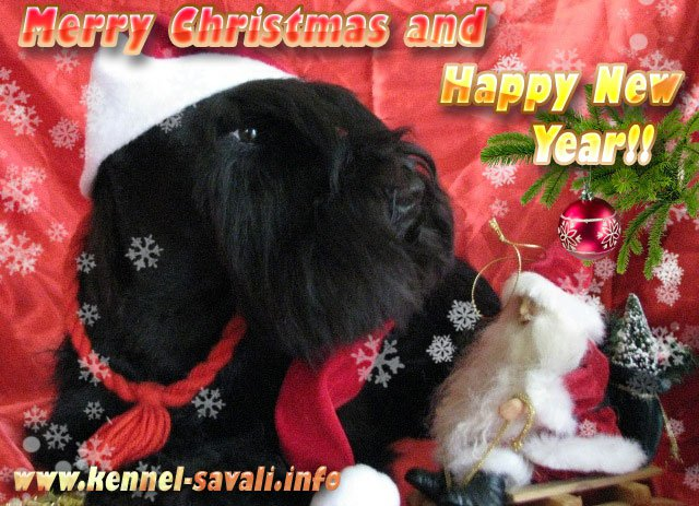 Merry Christmas and Happy New Year from kennel Savali!!! 15638811